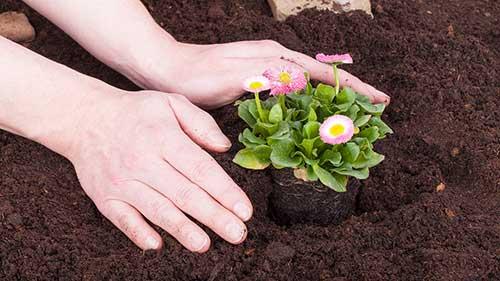 flores cultivadas